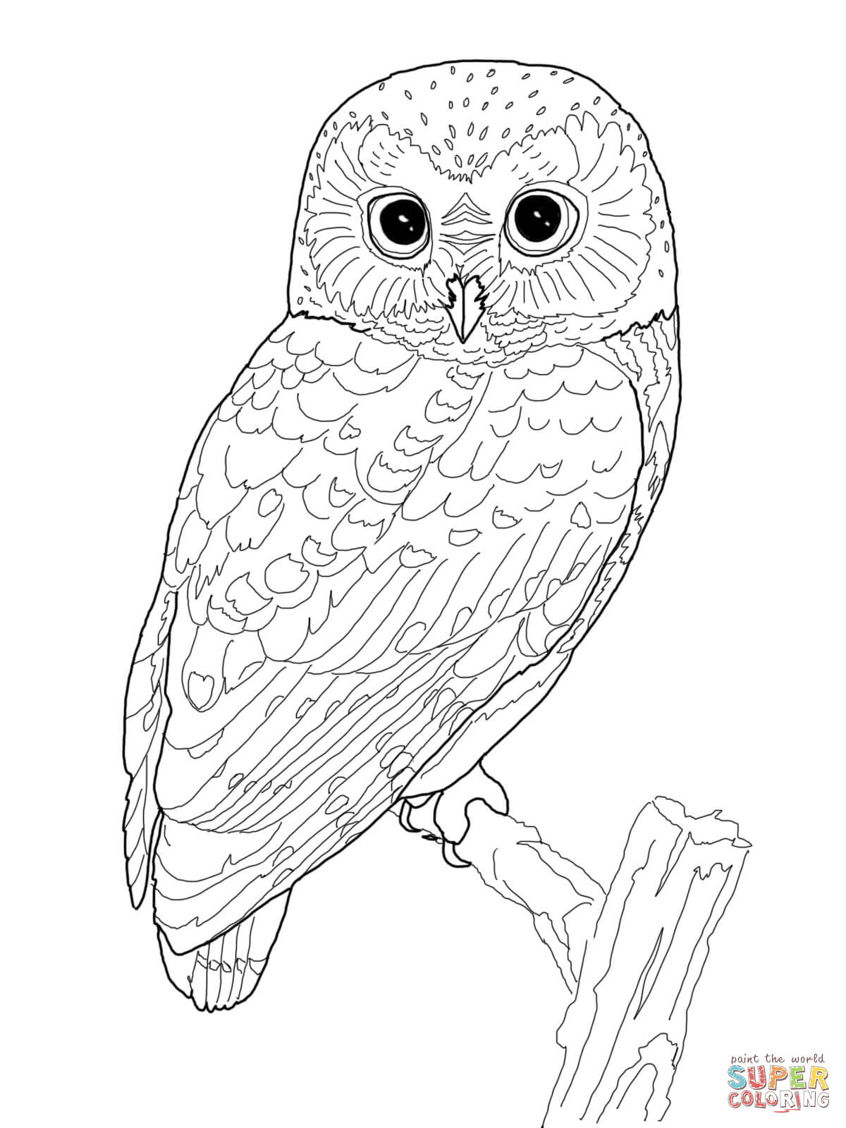 1200x1600 Northern Saw Whet Owl Coloring Page Free Printable Pages