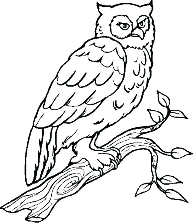 635x734 Owl To Color Drawing Sketches Owls Coloring Book Pdf