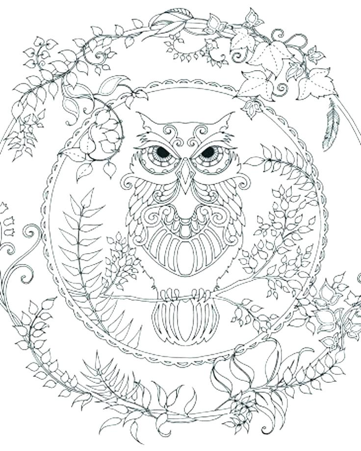 736x919 Owl Color Page Cortefocal.site