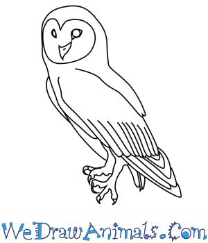 300x350 How To Draw An Australian Masked Owl