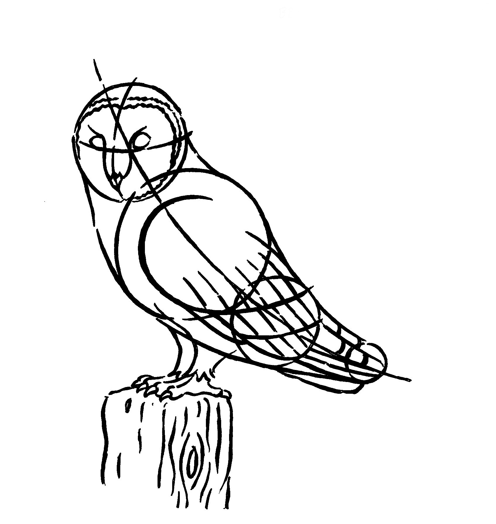 1691x1786 How To Draw A Barn Owl