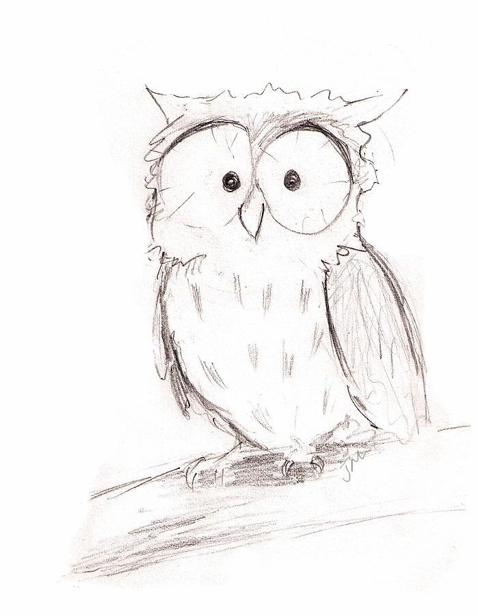 699x900 Little Owl Drawing By Jacqui Mckinnon