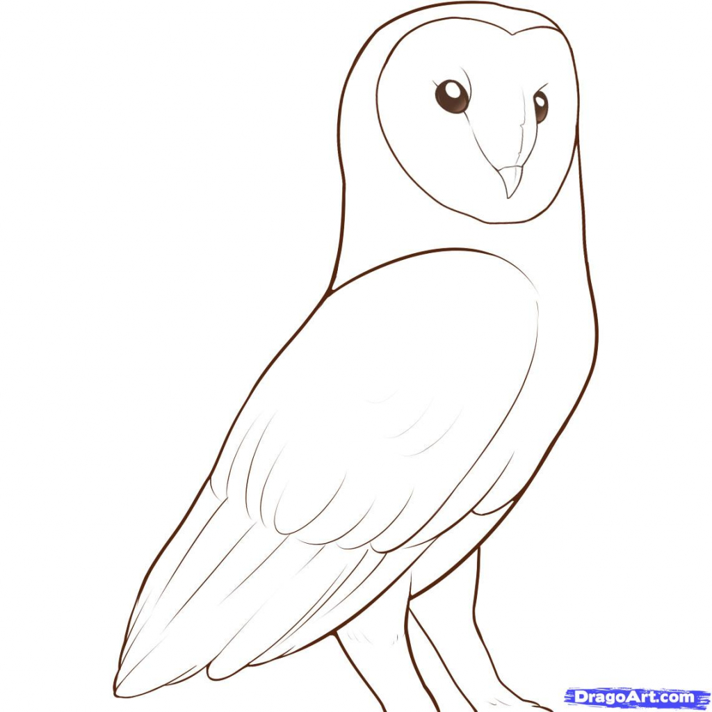1024x1024 Owl Drawing Easy