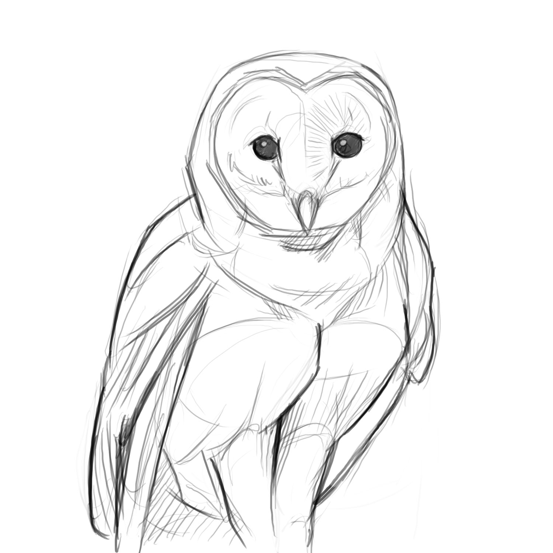 1500x1500 Owl Drawing ~ 3D Drawing