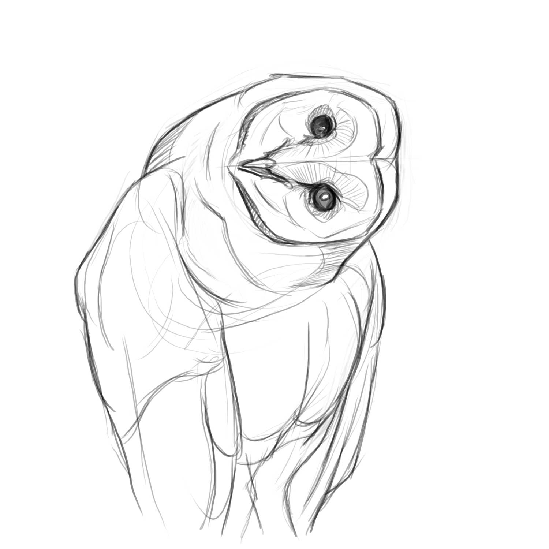 1500x1500 Owl Drawings More barn owl drawings (photo reference) Hoo