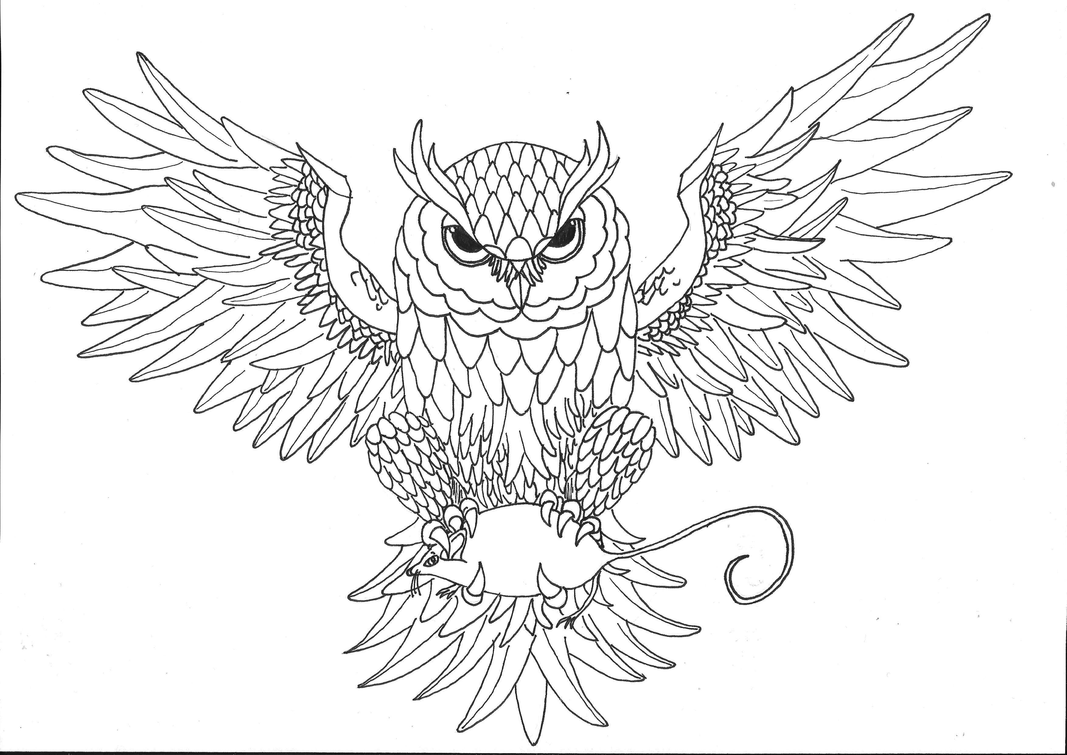 3507x2481 Graffiti Owl Drawing 60 Best Drawings Images On Pinterest Art