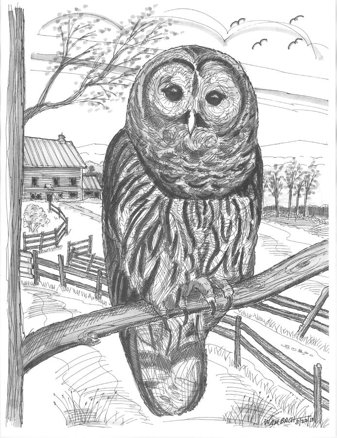 694x900 Vermont Barred Owl Drawing By Richard Wambach