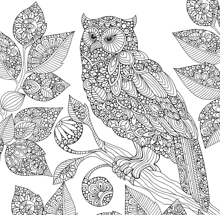 900x881 Black And White Owl Drawing By Valentina Harper