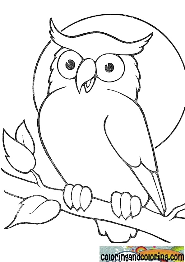 Owl Drawing Cartoon