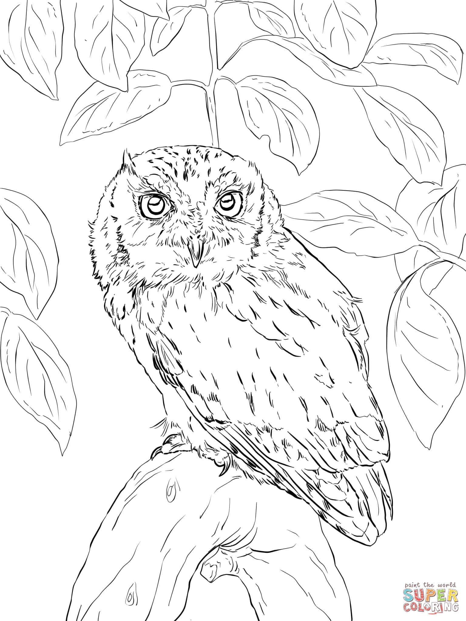 1536x2048 Eastern Screech Owl Coloring Page Free Printable Pages