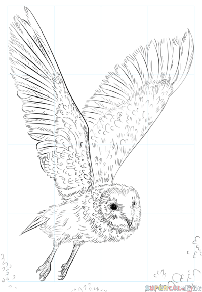 399x575 How To Draw A Barn Owl Step By Step Drawing Tutorials