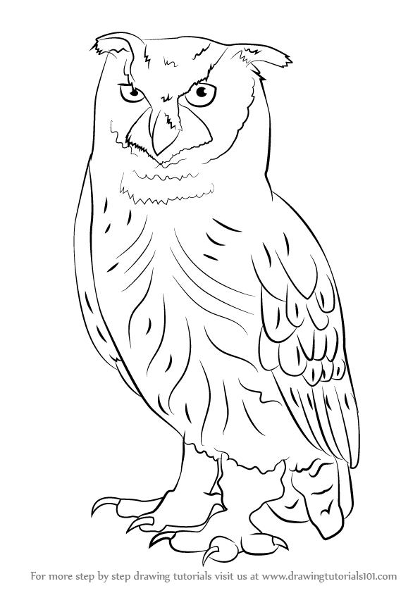 596x842 Learn How To Draw An Eurasian Eagle Owl (Owls) Step By Step