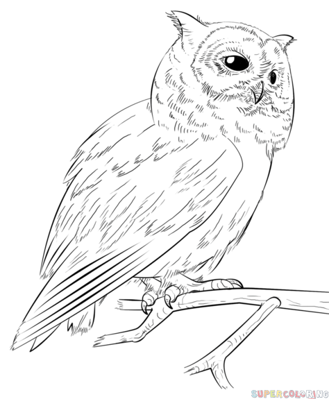 474x575 Screech Owl Coloring Pages