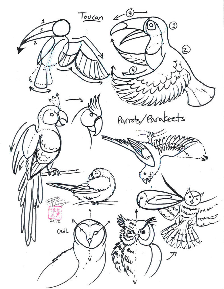 788x1013 Draw Toucan, Parrot And Owl By Diana Huang