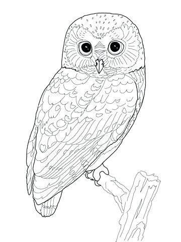 Owl Eyes Drawing At Getdrawings Com Free For Personal Use Owl Eyes