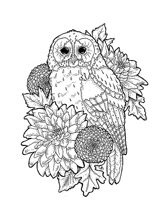 Owl Images Drawing