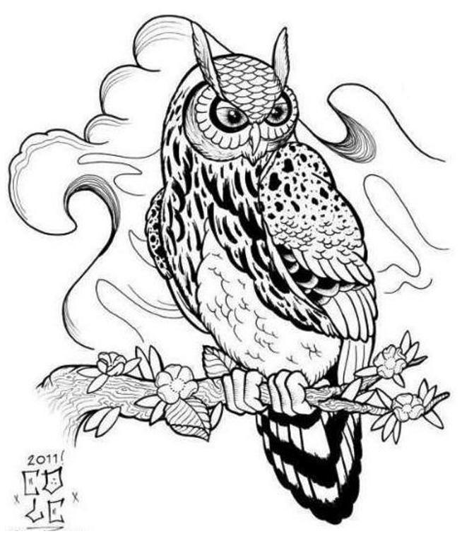 654x759 Best Photos Of Owl Outline Designs