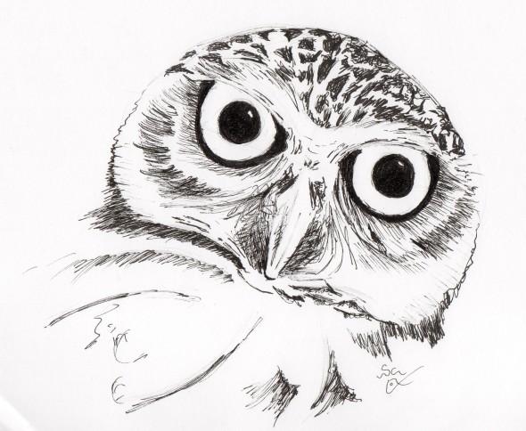 590x484 Burrowing Owl