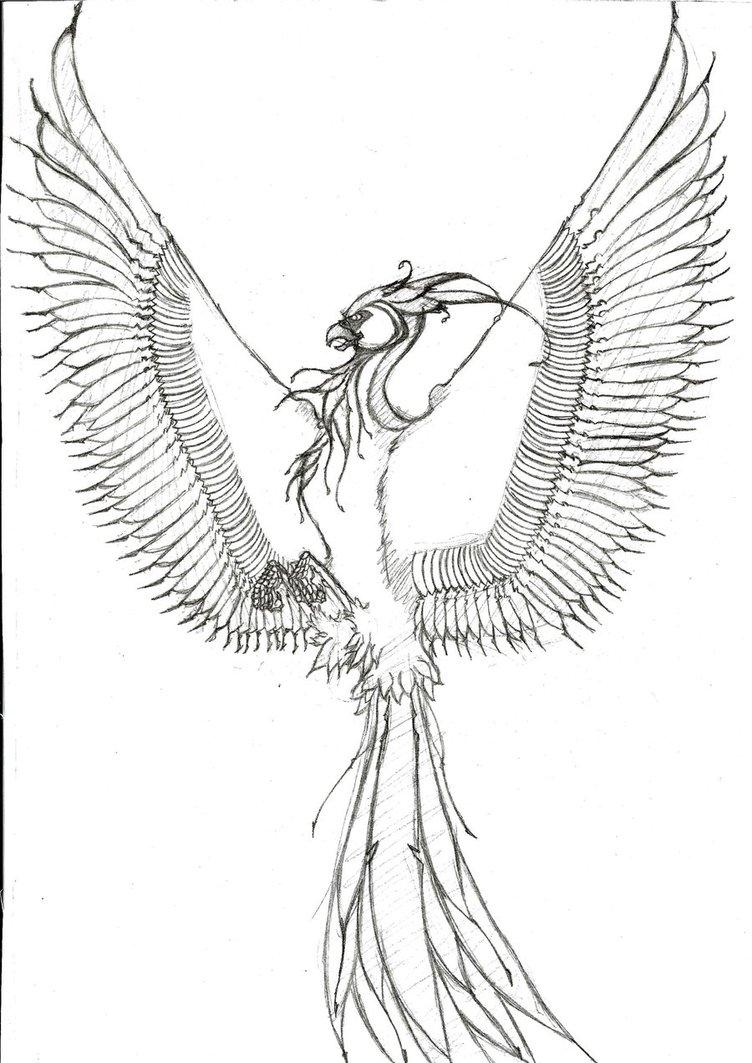 Coloring Pages Bird A 752x1063 FenixAugurey By KingSketcher On DeviantArt