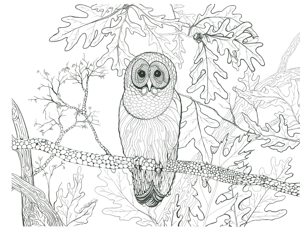 1024x782 Animals And Organic Shapes Coloring Book Owl By FoamysShadow On