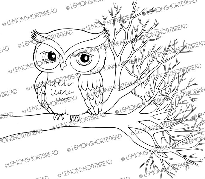Owl On Tree Branch Drawing At Getdrawings Com Free For Personal
