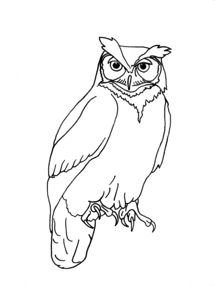 Owl Outline Drawing At Getdrawings Com