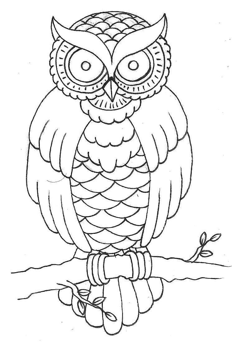 Owl Outline Drawing at GetDrawingscom Free for personal use Owl