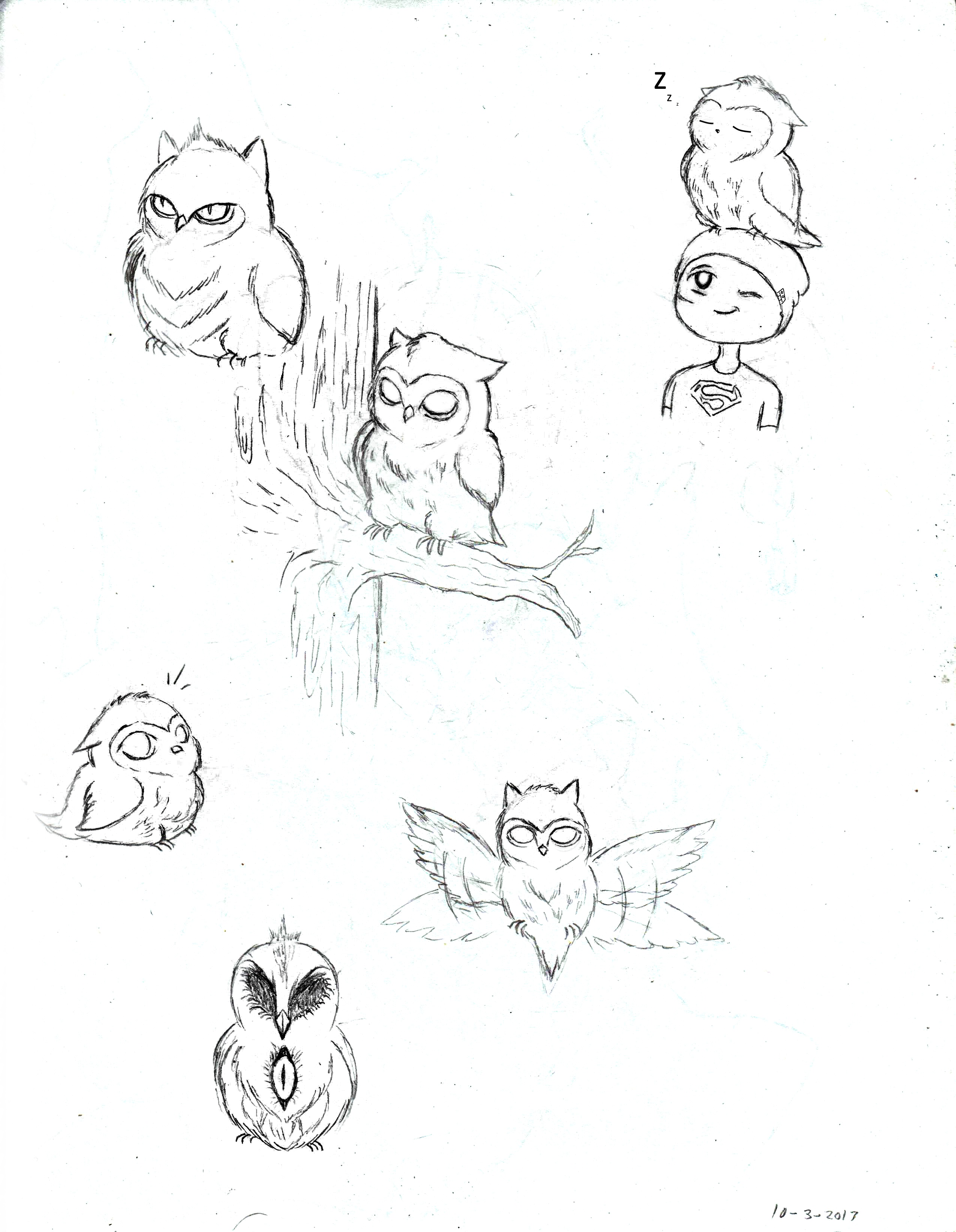 Owl Pictures Drawing