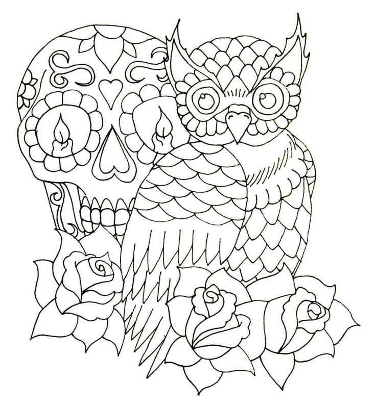 Owl Skeleton Drawing