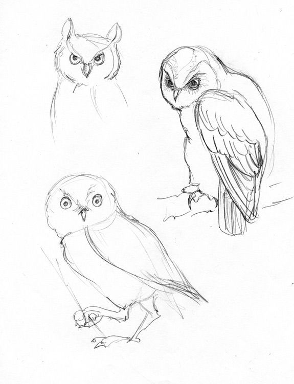 575x751 Hogwash Amp Nonsense Sketchbook Thursday Owls!