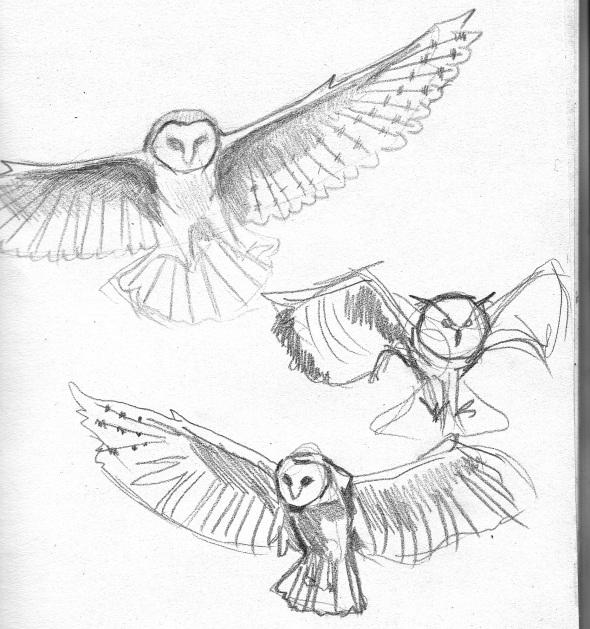 590x629 Owl Sketches, By Mara Williams Design Art Owl