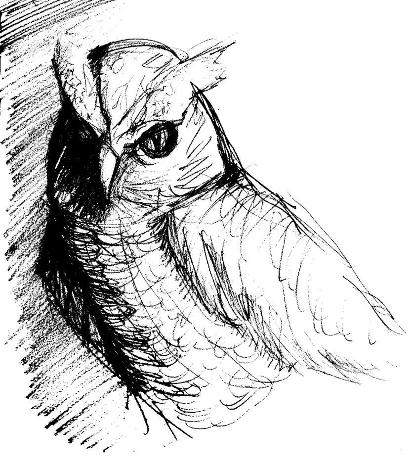836x956 Owl Sketch By Tavanaka