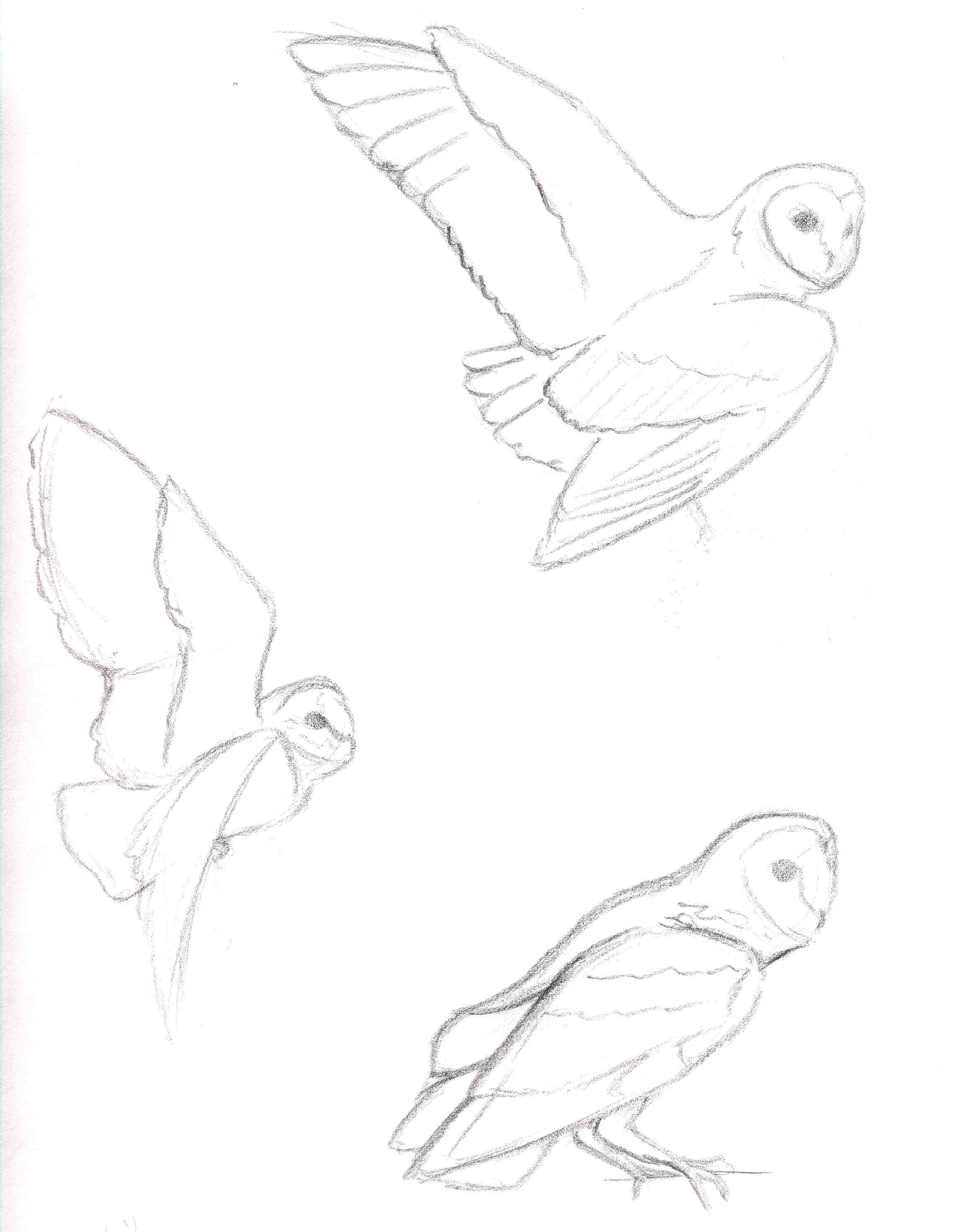 2314x2973 Owl Sketches