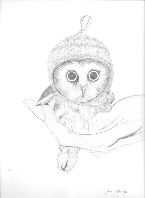 570x778 Pin By Ellen Bounds On Owl Sketches Owl Sketch