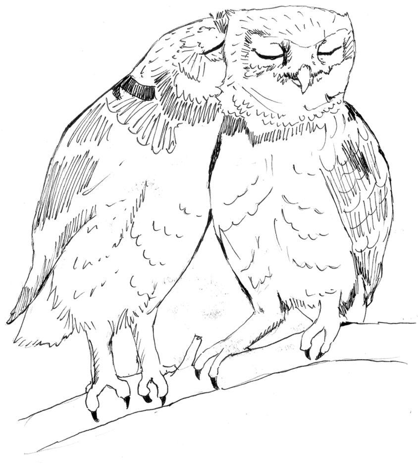 844x947 Two Owls Sketch By Greenie447