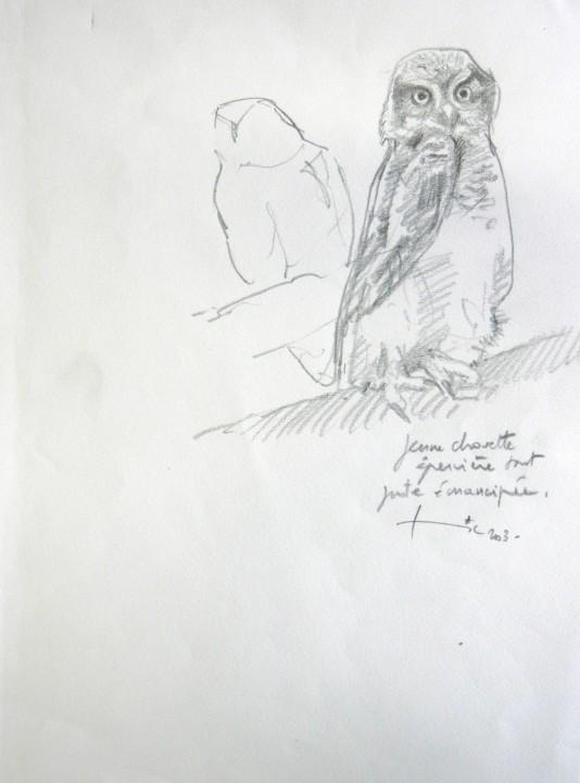 534x720 Yong Owl (Field Sketch)