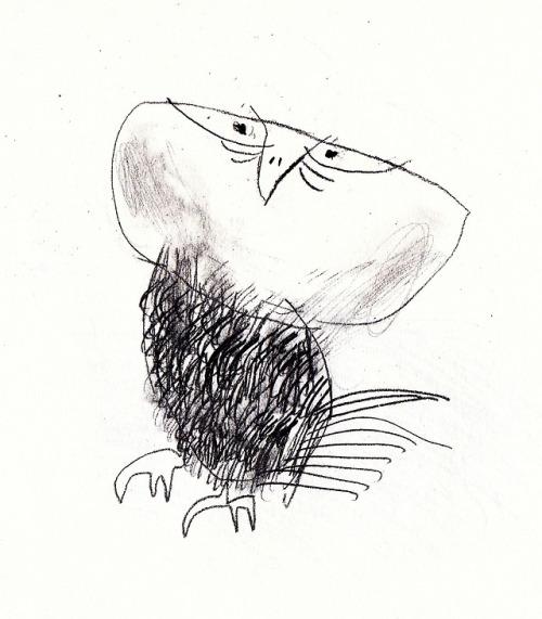 500x571 Owl Sketches Tumblr