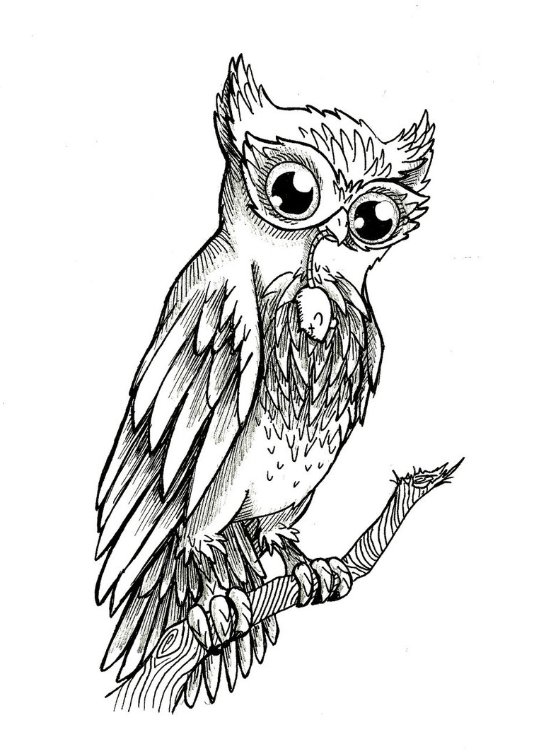 Owl Tattoo Drawing At Getdrawings Com Free For Personal Use Owl