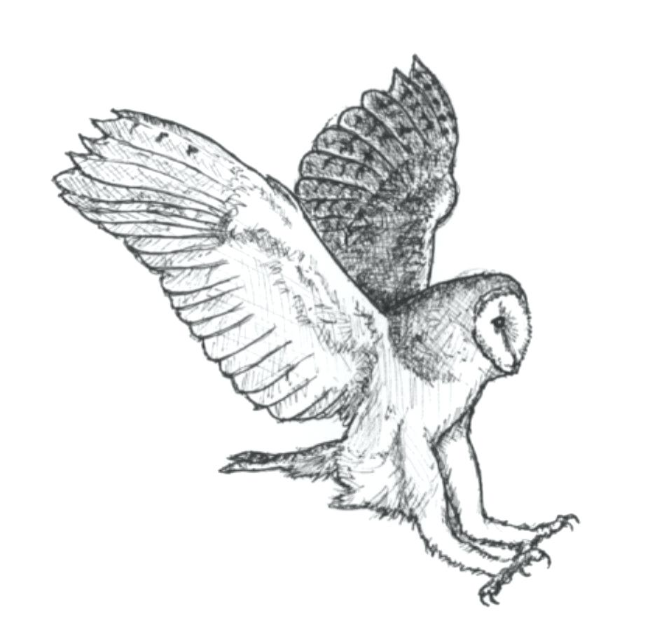 Owl Wing Drawing at GetDrawings.com | Free for personal use Owl Wing ...