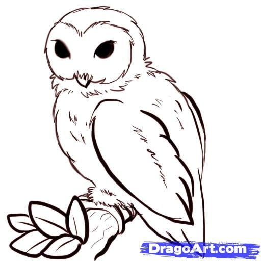 512x512 Owl Clipart Step By Step Collection