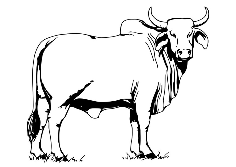ox drawing at getdrawings com free for personal use ox drawing of rh getdrawings com ox head clipart ox images clip art