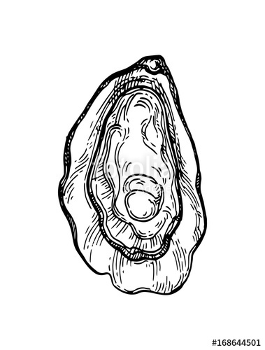379x500 Oyster Shell Ink Sketch. Stock Image And Royalty Free Vector
