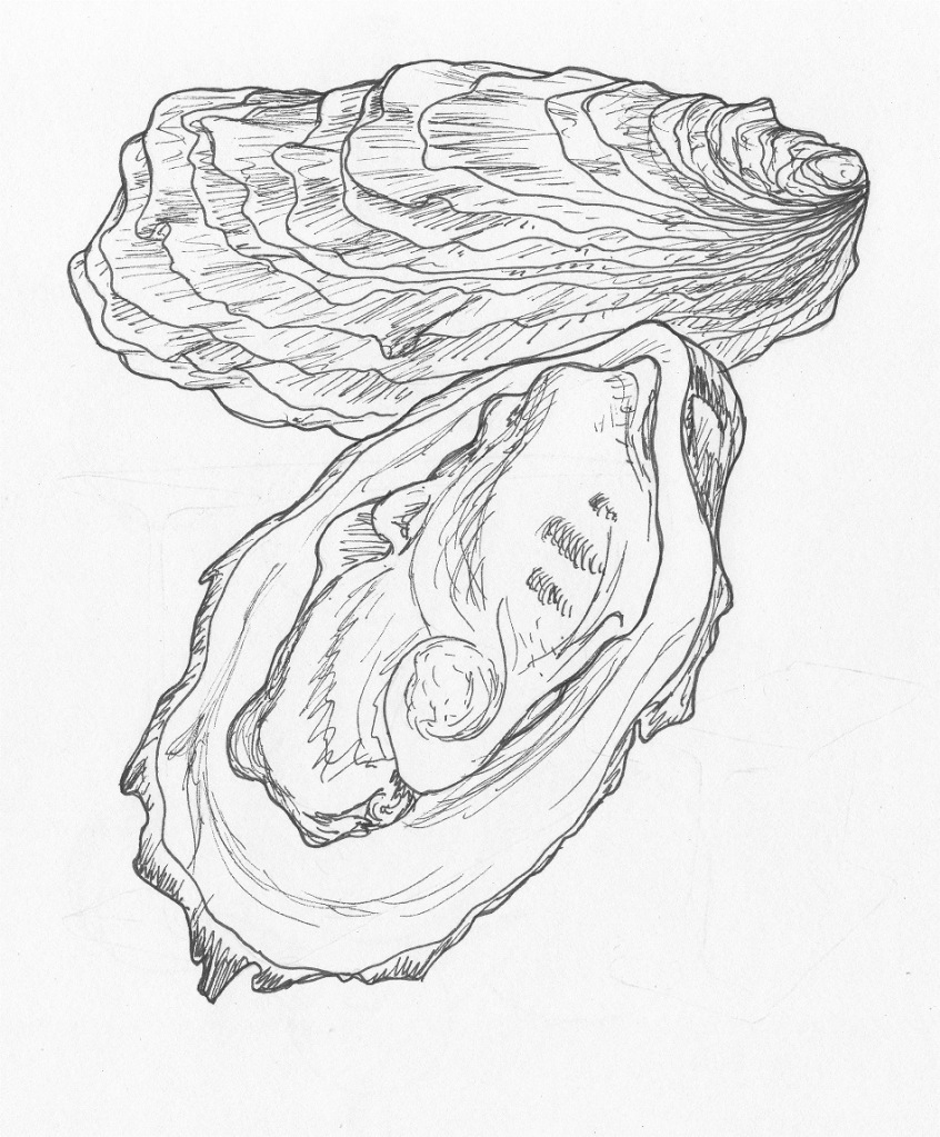 846x1023 Oyster Things We Create Oysters, Shell Drawing