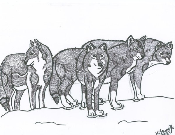 600x465 Pack Of Wolves By Dragonfoxstar