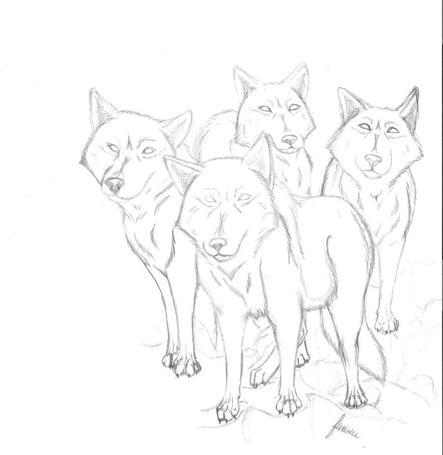 882x906 Pack Of Wolves By Furiouswolf