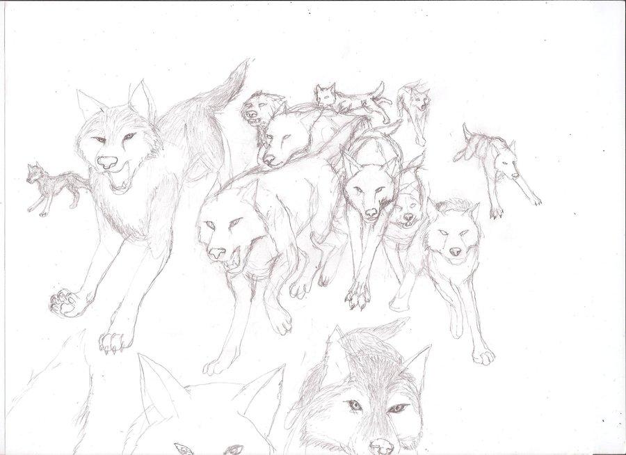 900x654 Wolf Pack Wip By Rhahsid
