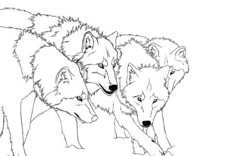 469x304 Wolf Pack Coloring Pages Just Colorings