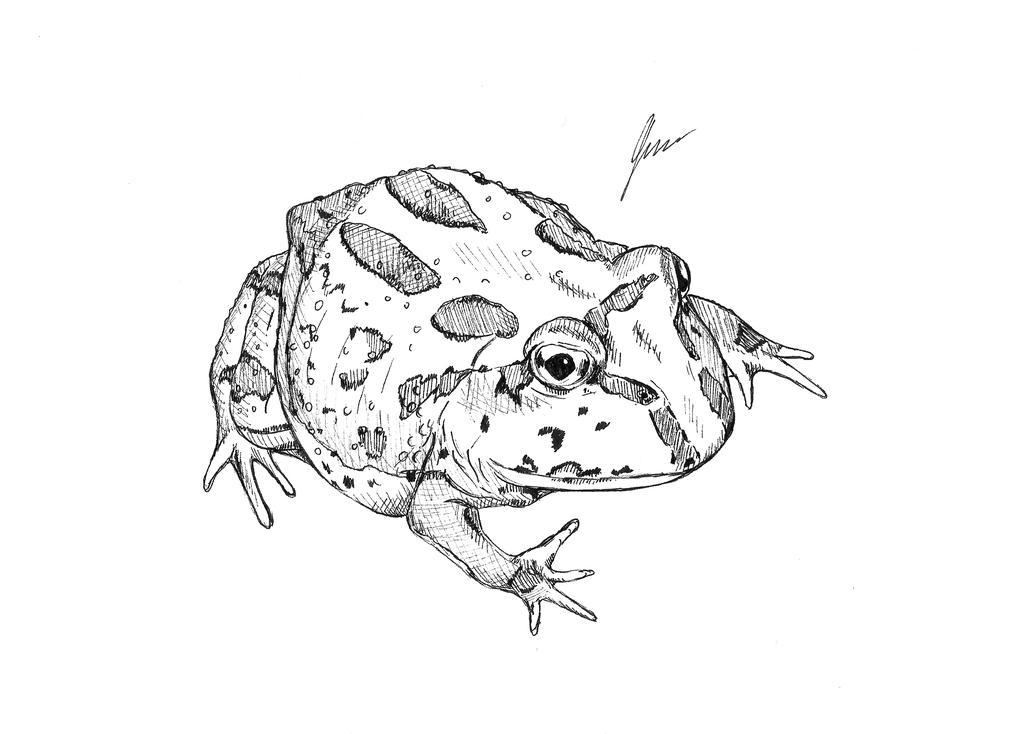 1024x734 Peppermint Pacman Frog By Jasminecollinsart