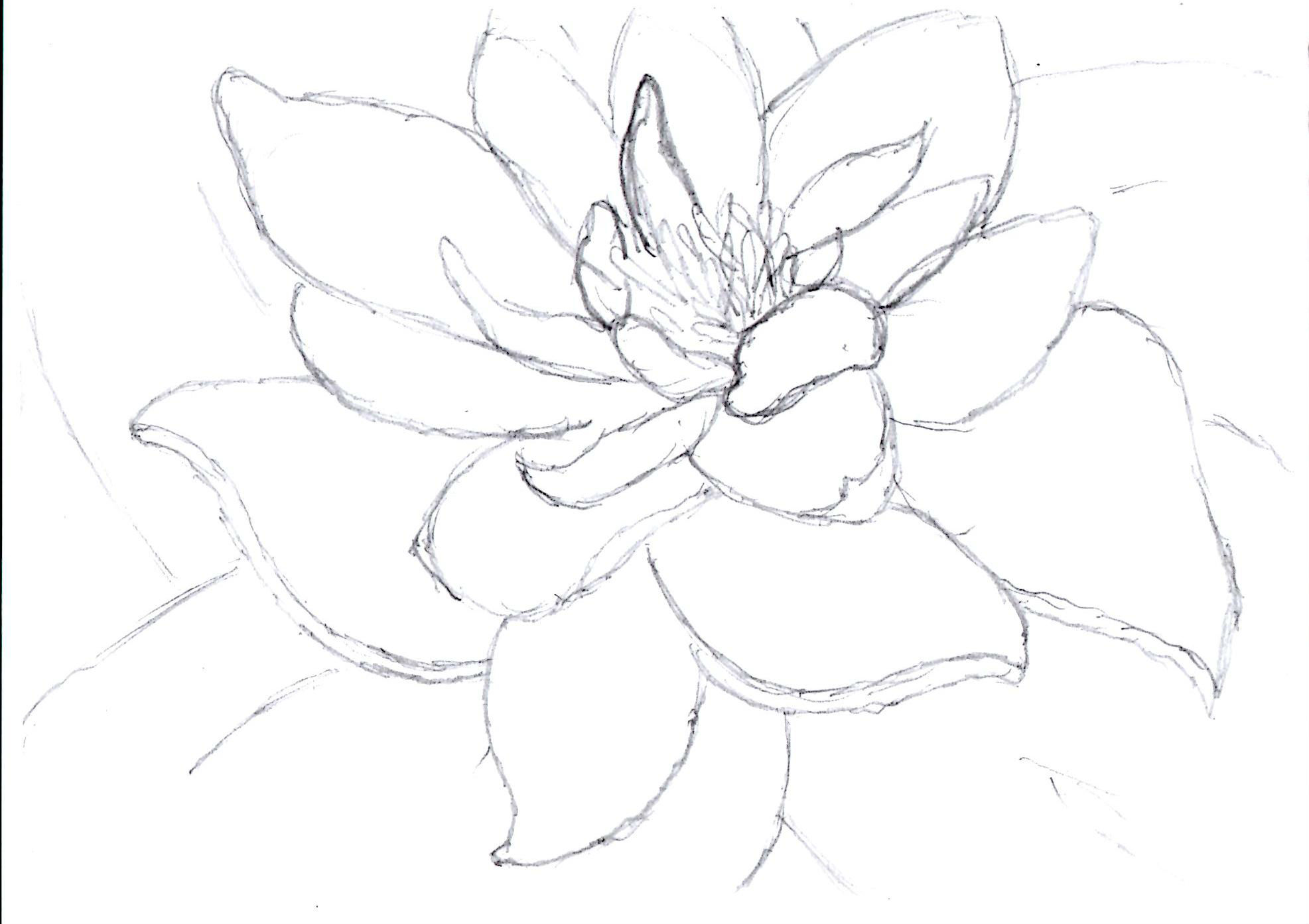 1973x1394 Lily Pad Drawing A Life Savored