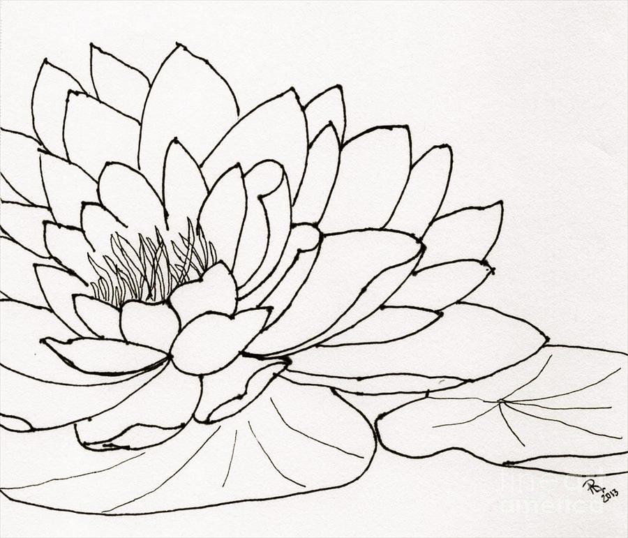 900x771 Lily Pad Drawings Fine Art America